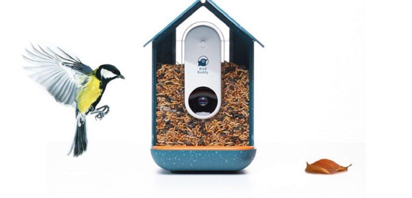 Slovenci skupili dva miliona dolara za kućicu za ptice