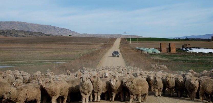Novi Zeland proglasio vanrednu klimatsku situaciju