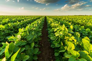 Brazil hrani 10 odsto svetske populacije