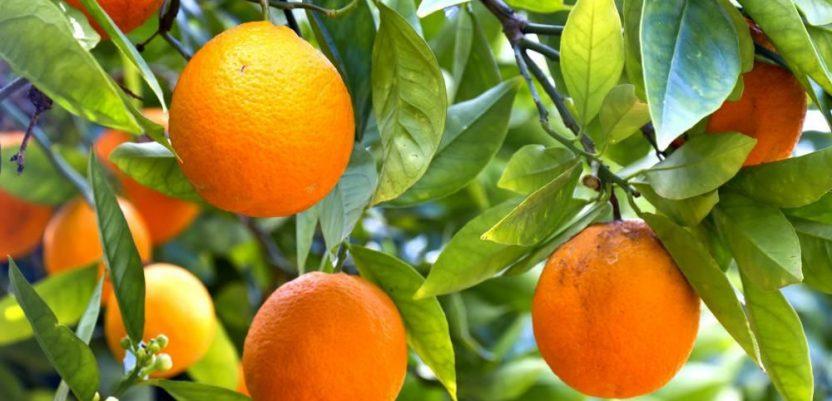 Sevilja će koristiti pomorandže kao izvor električne energije