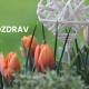 Cvetni pozdrav: Hortikulturni priručnik za sve ljubitelje prirode, bilja i cveća