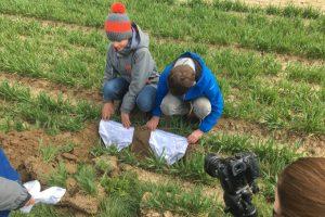 Švajcarski farmeri zakopavaju donji veš u službi nauke