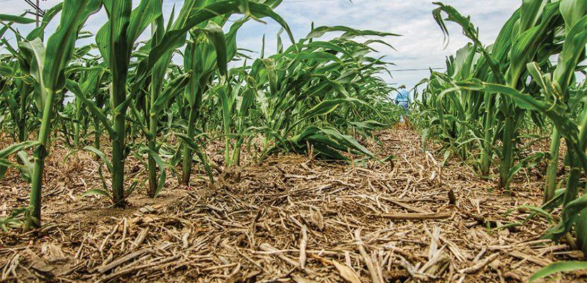 """""""Curenje"""" ugljenika pogubno za evropsku poljoprivredu"""