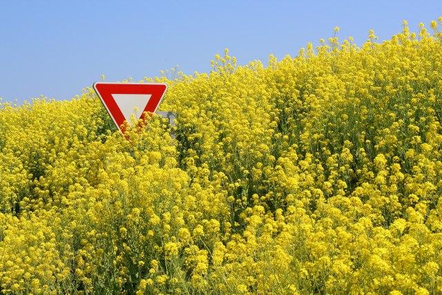 Stručnjaci: Dozvoliti promet GMO