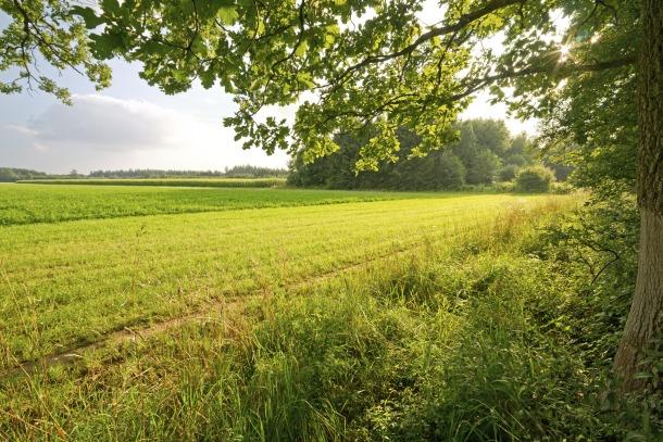 Plan za selo: Zemljište i 10.000 evra po osobi
