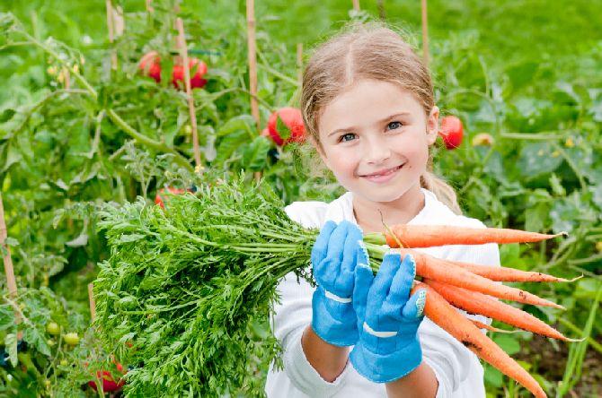 Globalni procvat organskog sektora