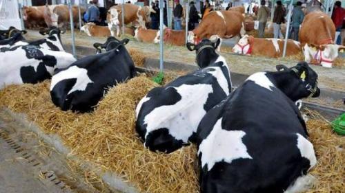 Vojvođanske farme na korak do propasti