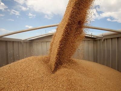 Srbija nije izvezla pšenicu koja sadrži olovo