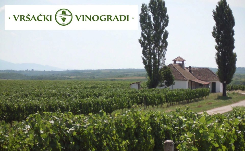 """Vršački vinogradi: Tajkuni """"beru"""" grožđe"""