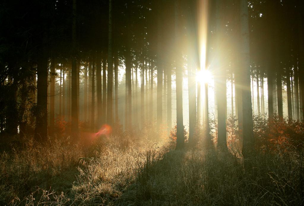 Evropske šume stare, manje apsorbuju ugljen dioksid