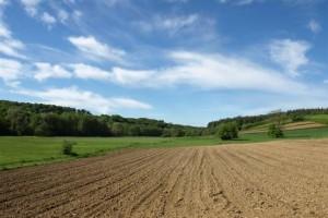 Bogatstvo od pšenice