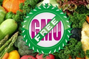 Stručnjaci: GMO poguban po Srbiju