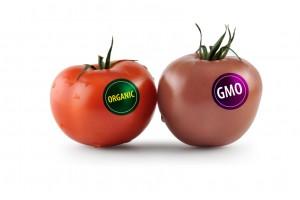 """""""Uskoro sa ministarstvima o GMO"""""""