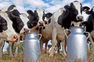 IFCN izgledi sektora mleka do 2023.
