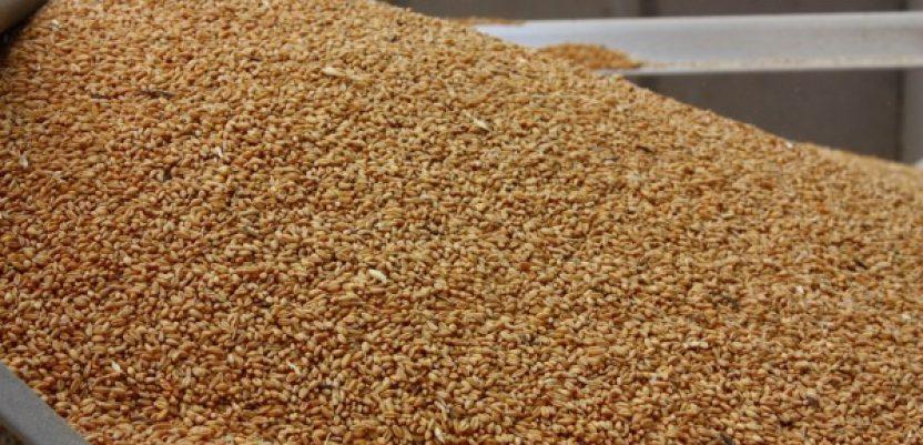 Hrvati prodaju srpsku pšenicu na Kosovu