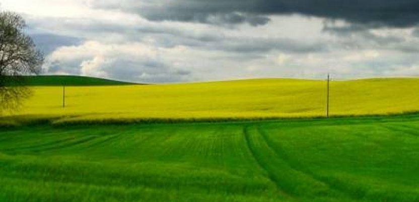 Slovenački milijarderi kupili na hiljade hektara u Vojvodini