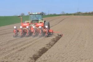 Sejati samo deklarisano seme pšenice