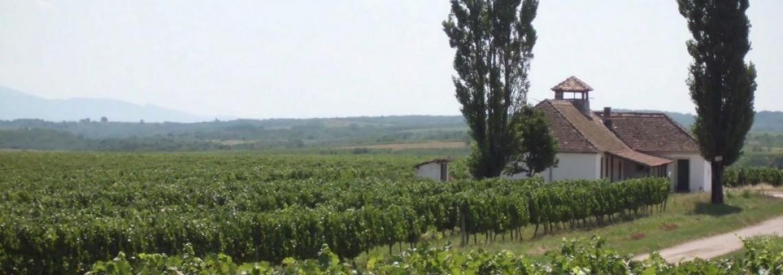 Vinogradi: Gazda iz trećeg puta?