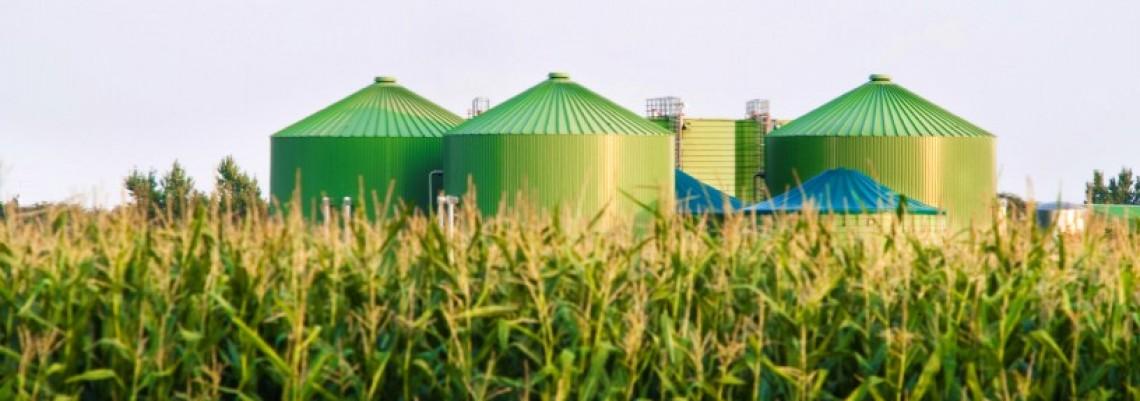 Vršac: Nastavljeni pregovori o izgradnji elektrane na biomasu