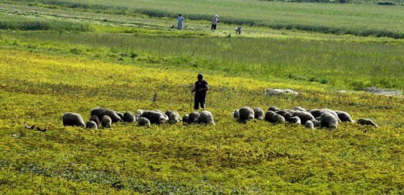 Predlog Ministarstva poljoprivrede o PIO stigao u resor finansija
