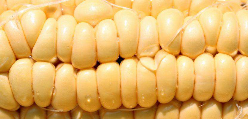 Kina povećava proizvodnju kukuruza