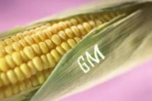 Odbor EP odbacio kompromis o uvozu GM kultura