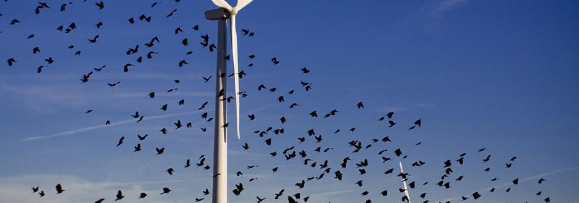 """Najveći vetropark """"zakočile""""- ptice"""