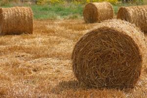 Finci žele da prave energiju od sremske biomase