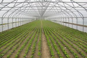 Novi konkursi za podršku poljoprivredi