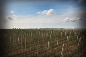 Al Dahra preuzima 51% Rudnap agrara