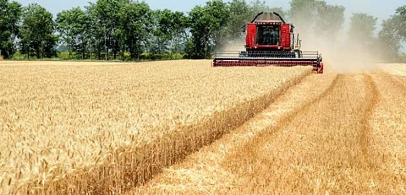 Hrvatska će morati da uveze pšenicu