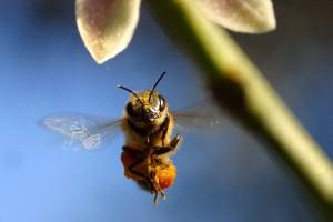 Osnovan Operativni tim za suzbijanje krađa pčela