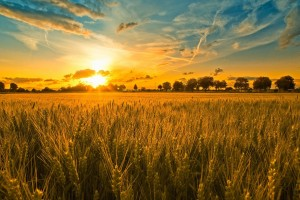Rusija bolje trgovala sa žitom, nego sa naoružanjem
