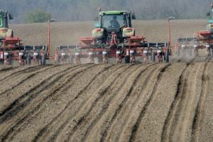 Još dve nedelje za presejavanje kukuruza