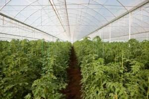 Realizacija poljoprivrednih inkubatora