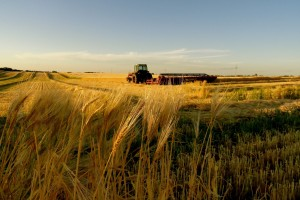 Serbia will export wheat despite lower yield