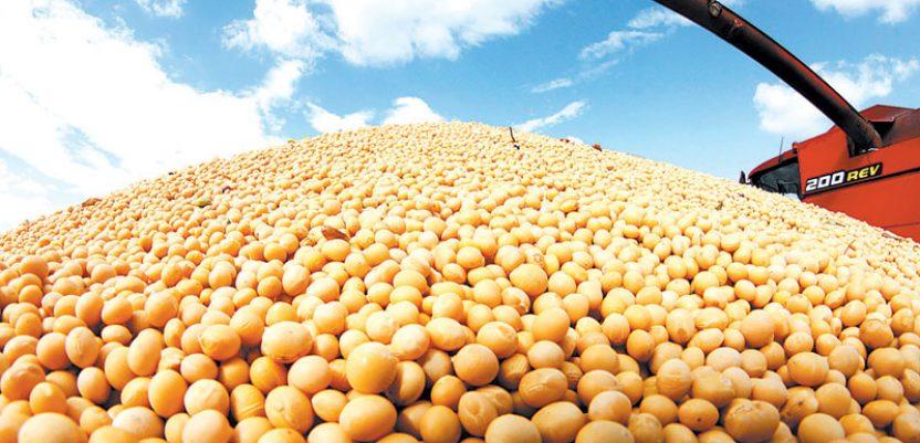 Stručnjaci savetuju: Pojačati kontrolu uvoza soje