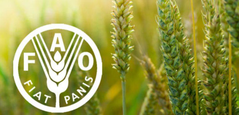 FAO: Pad svetskih cena hrane u septembru