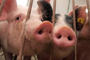 Zamrznuto meso iz EU prodaju kao sveže