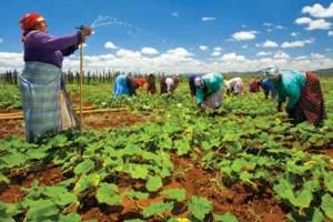 Semenom i znanjem osvajamo Južnu Afriku