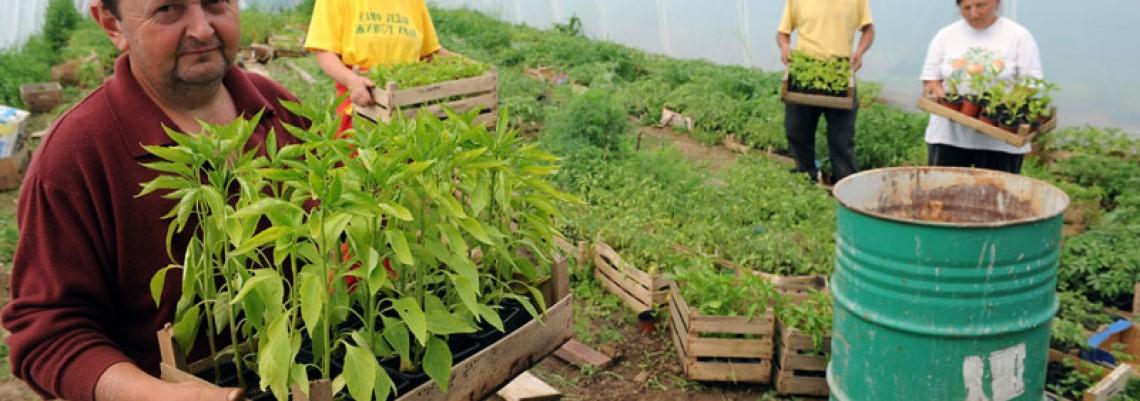Uzgajanje organske hrane u Rakovici