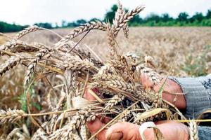 Spremne izmene Zakona o PIO u sektoru poljoprivrede
