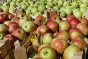 Rast cene jabuke od Nove godine