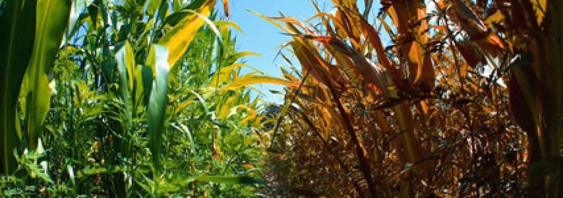 Da li srpska poljoprivreda treba da se plaši klimatskih promena?
