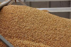 Država i agencije kvare izvoz žita