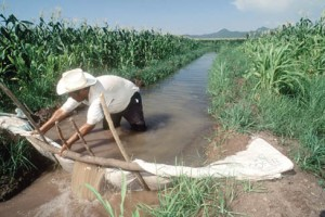 FAO: Treba nam produktivnija poljoprivreda koja troši manje vode