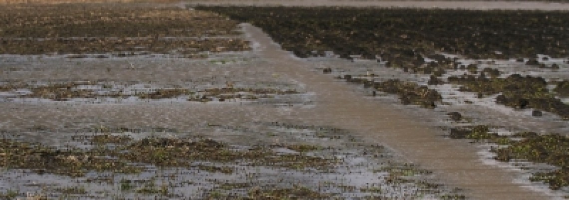Marić: Srbija prepuna vode