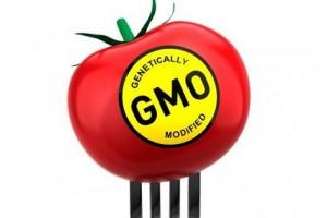 SAD Evropi: Pustite svima GMO