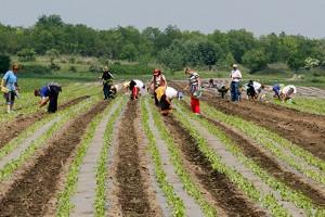 Potraga za sezoncima u poljoprivredi