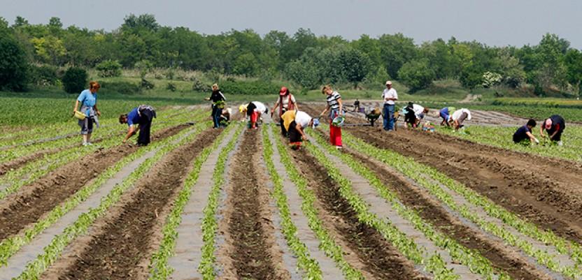 Posao za teško zapošljive kategorije stanovništva u poljoprivredi